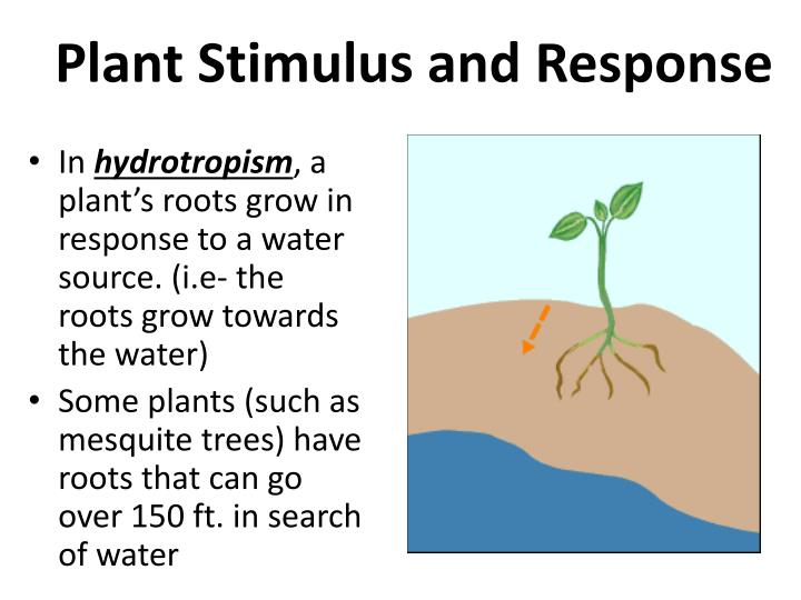 Plant Stimulus and Response