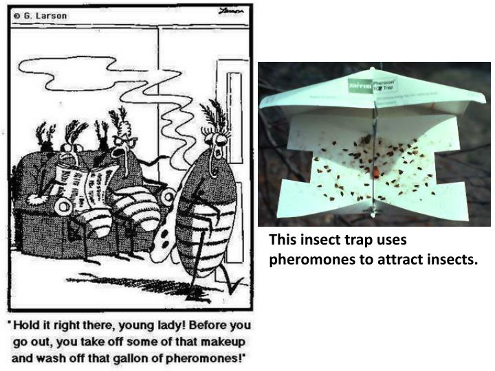 This insect trap uses pheromones to attract insects.
