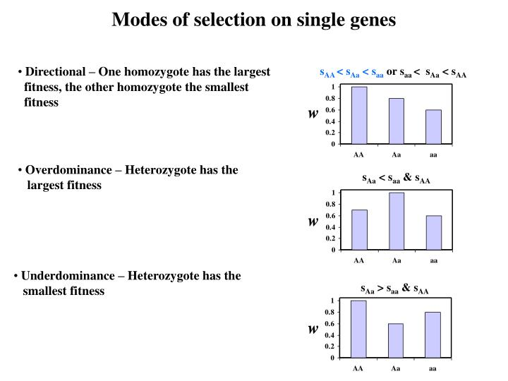 Modes of selection on single genes