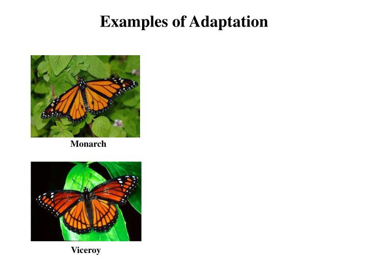 Examples of Adaptation