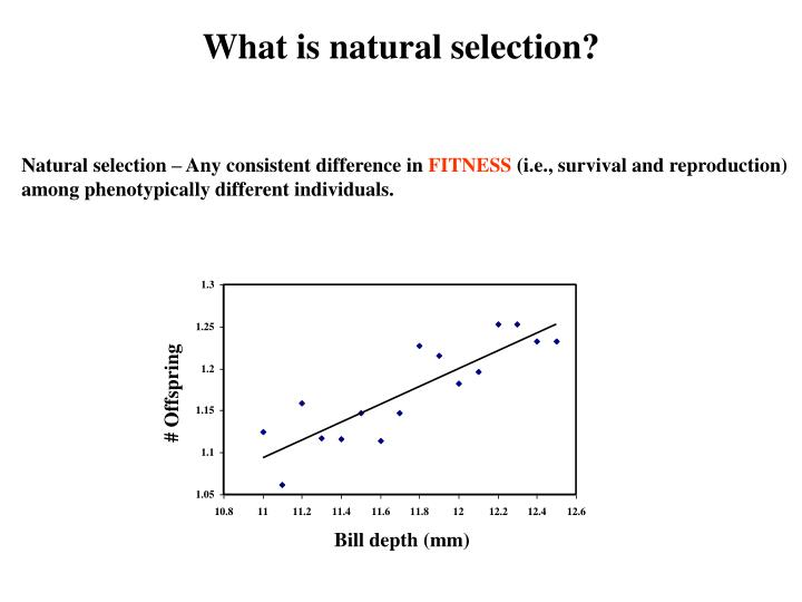 What is natural selection?