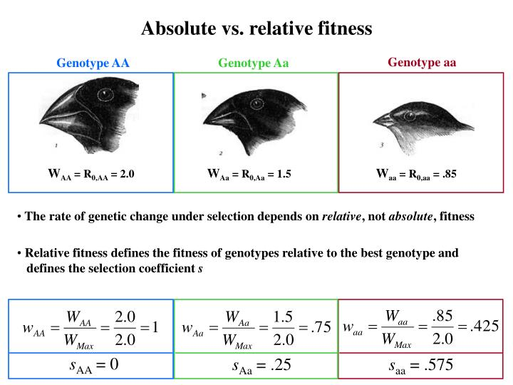 Absolute vs. relative fitness