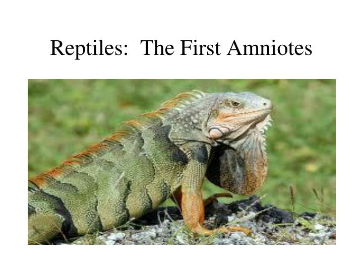 reptiles the first amniotes n.