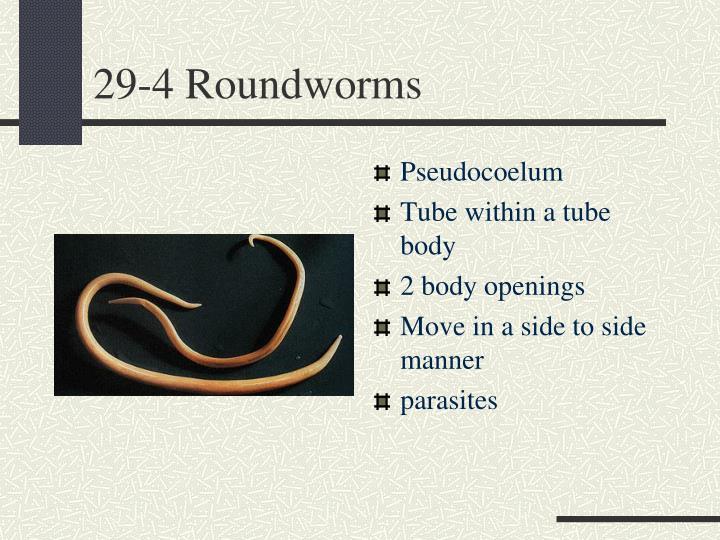 29-4 Roundworms