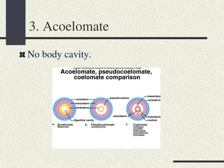 3. Acoelomate