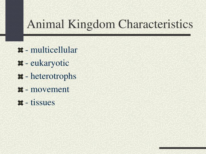 Animal kingdom characteristics