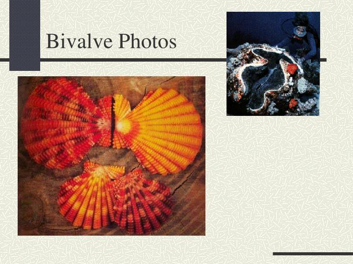 Bivalve Photos