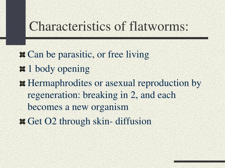 Characteristics of flatworms: