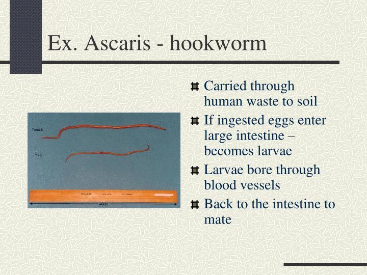 Ex. Ascaris - hookworm