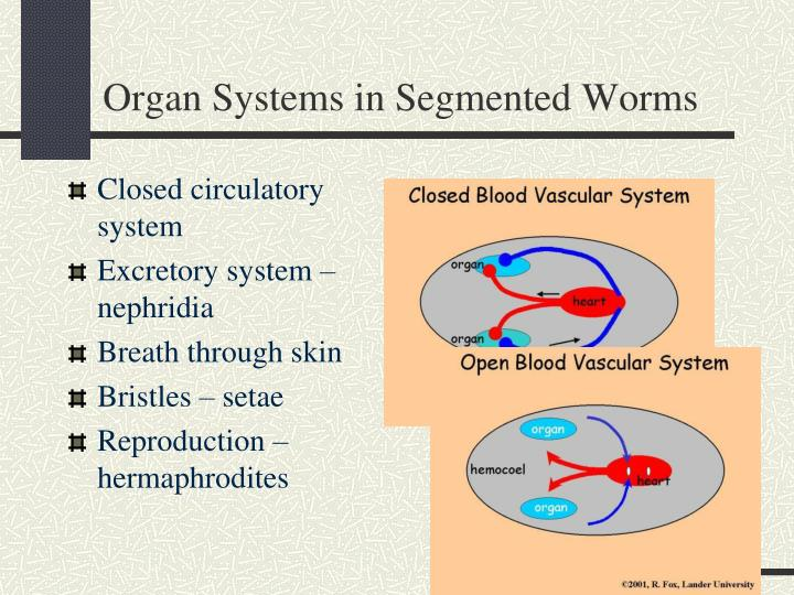 Organ Systems in Segmented Worms