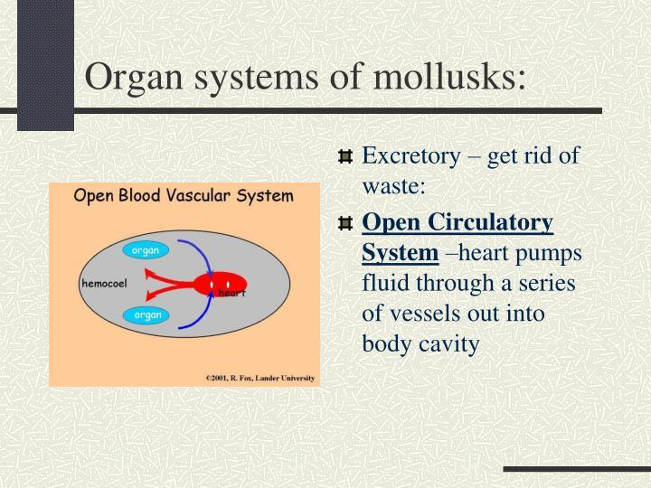 Organ systems of mollusks: