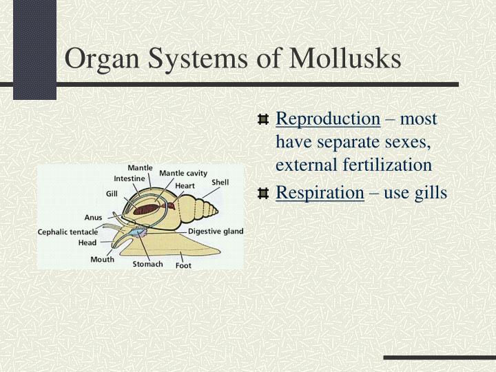 Organ Systems of Mollusks