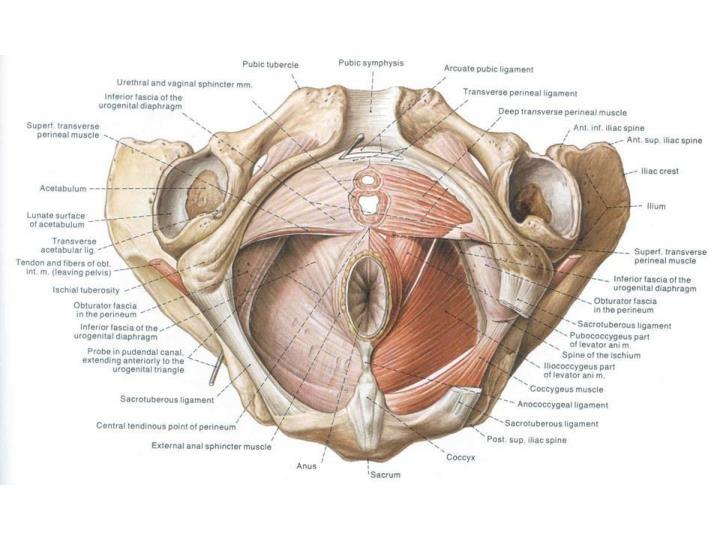 Biology 323 human anatomy for biology majors lecture 15 dr stuart sumida