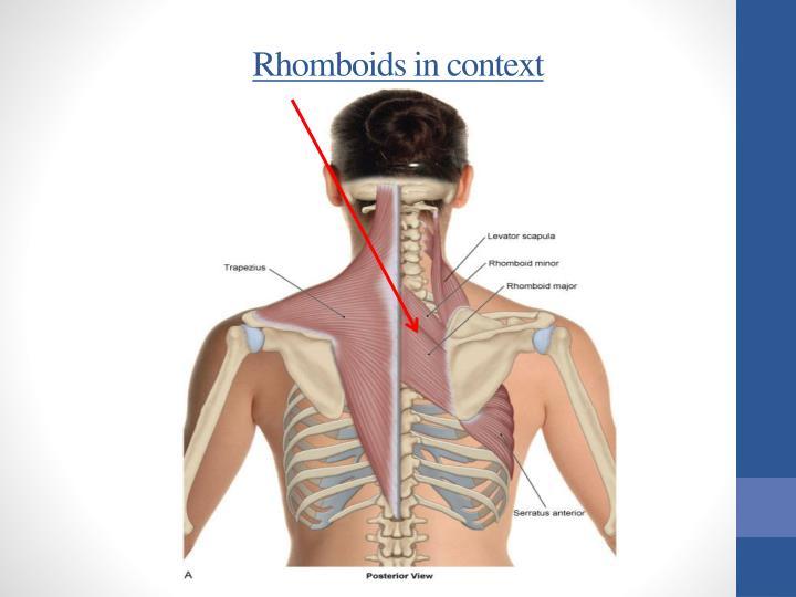 Rhomboids in context