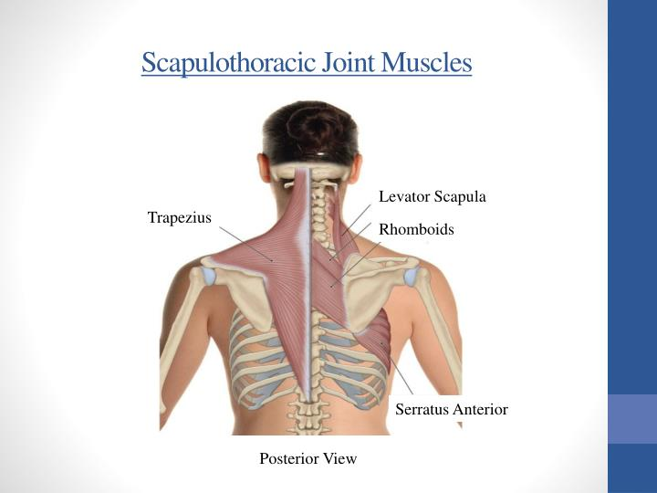 Scapulothoracic