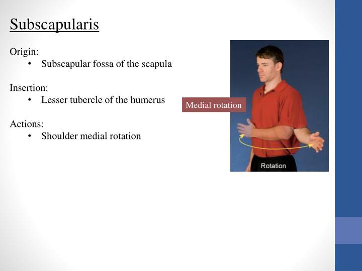 Subscapularis