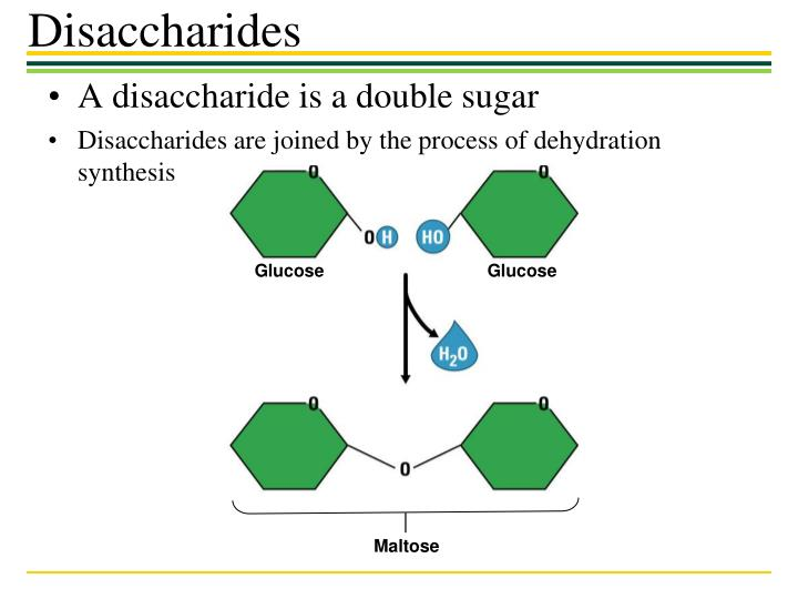 A disaccharide is a double sugar