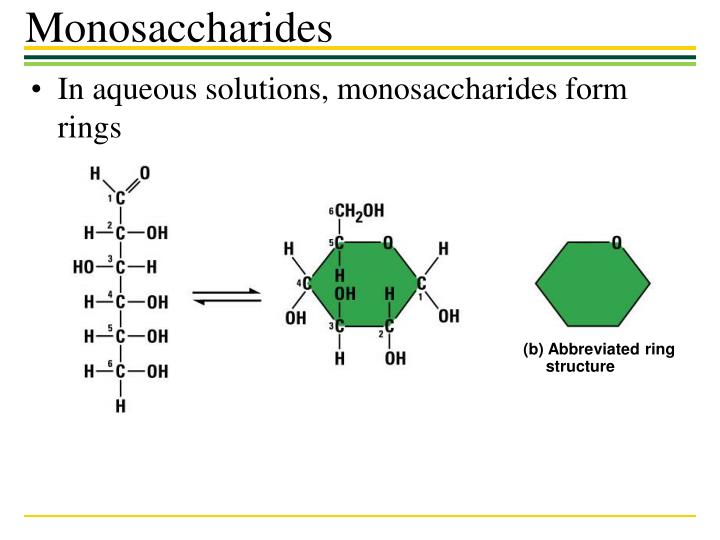 In aqueous solutions, monosaccharides form rings