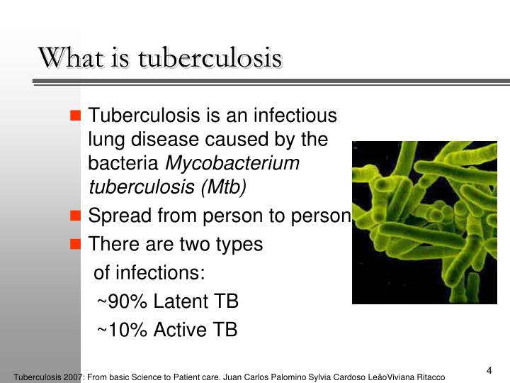tuberculosis an antique deadly infectious disease caused Tuberculosis caused more deaths than hiv in 2014  tuberculosis surpassed hiv as the leading cause of death from infectious disease in the world in 2014,  the 20th annual tuberculosis report.