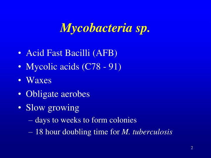 Mycobacteria sp