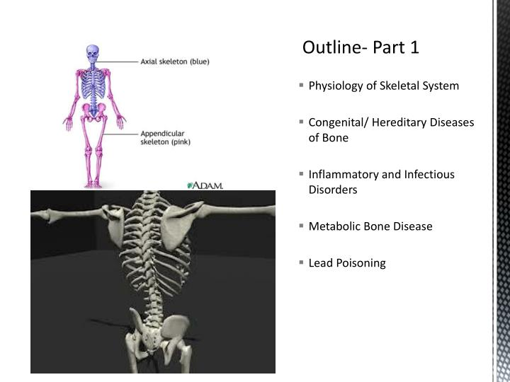 Physiology of Skeletal System