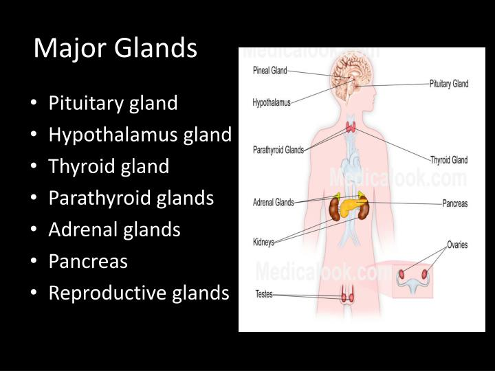 parathyroid and adrenal glands Learn about parathyroid glands, where they are located, and how parathyroid glands control calcium levels parathyroid function discussed and hyperparathyroidism introduced the regulation of blood calcium is discussed along with the meaning of high blood calcium.