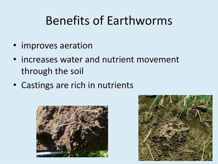Benefits of Earthworms