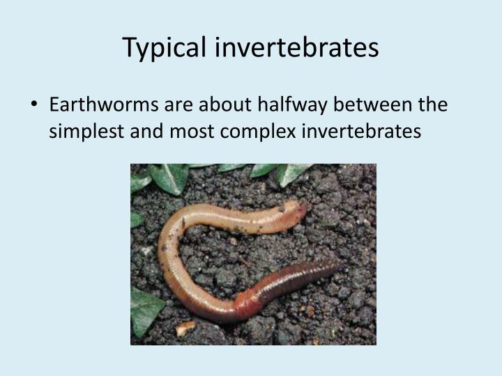 Typical invertebrates