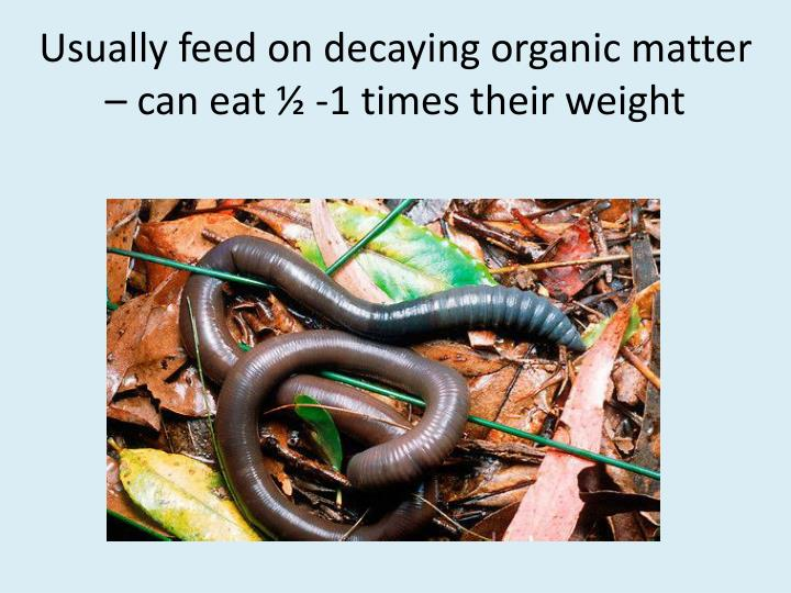 Usually feed on decaying organic matter – can eat ½ -1 times their weight