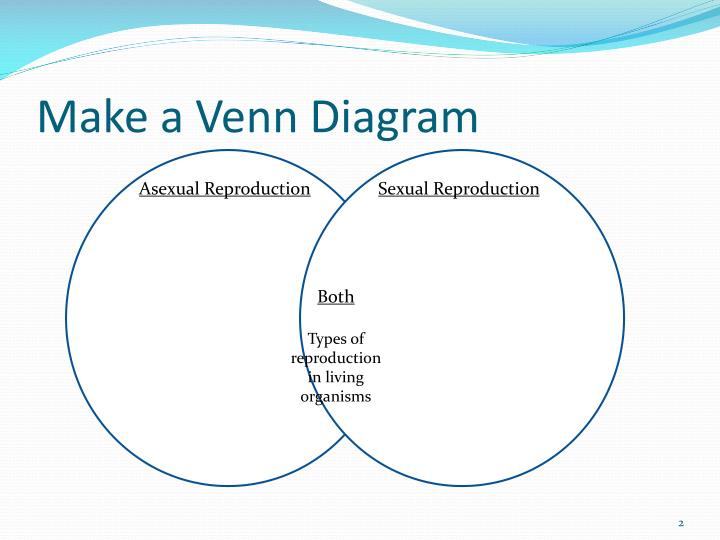 Binary Fission Vs Mitosis Venn Diagram Kordurorddiner