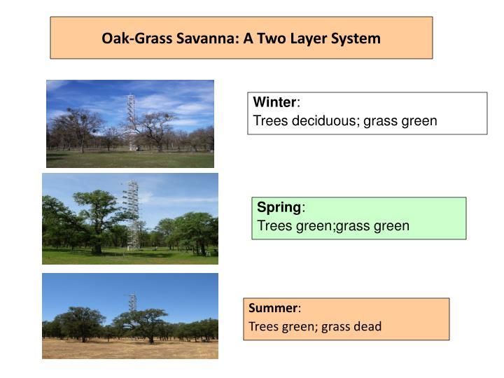 Oak-Grass Savanna: A Two Layer System