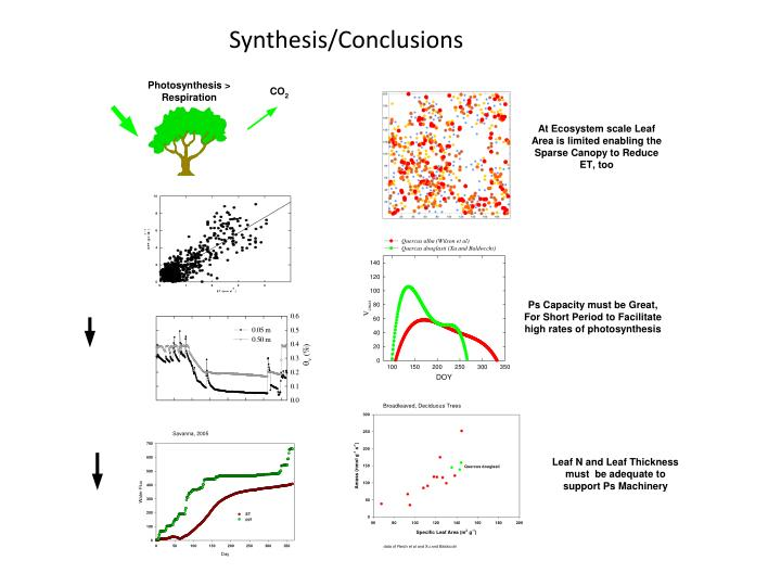 Synthesis/Conclusions