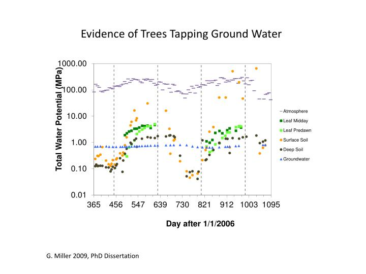 Evidence of Trees Tapping Ground Water