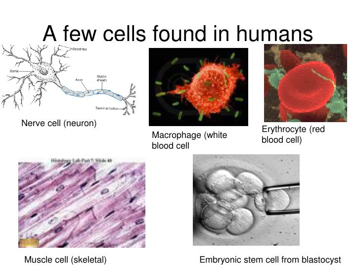 A few cells found in humans