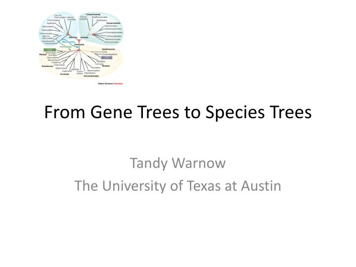 from gene trees to species trees n.