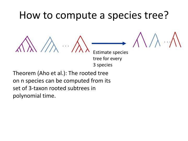 How to compute a species tree?