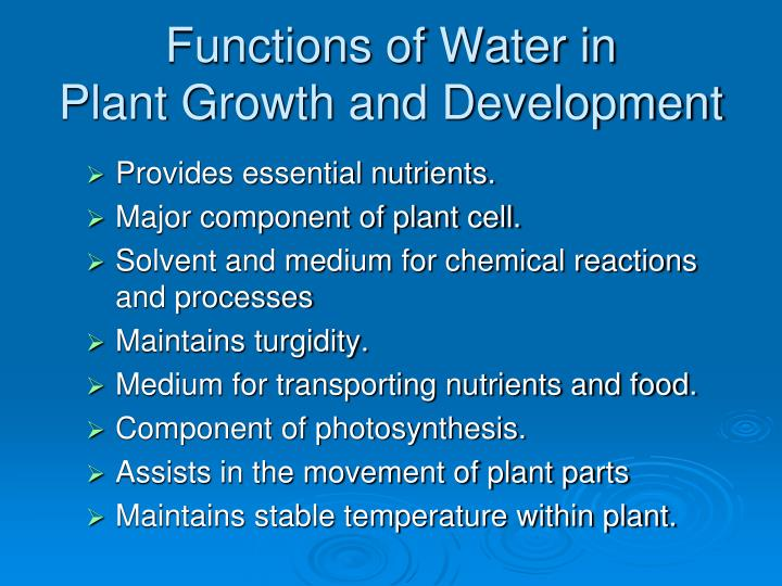the importance of water in plant growth Measuring dry weight: since plants have a high composition of water and the level of water in a plant will depend on the amount of water in its environment (which is very difficult to control), using dry weight as a measure of plant growth tends to be more reliable.