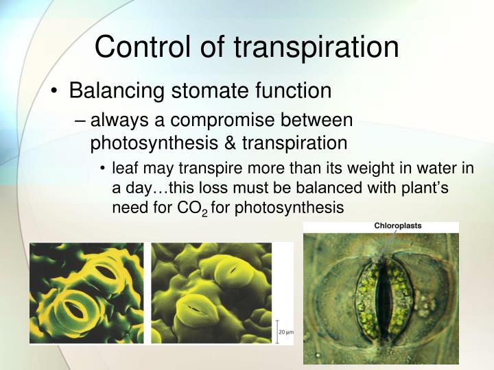 transpiration ap biology - 720×540