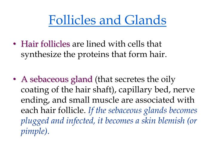 Follicles and Glands