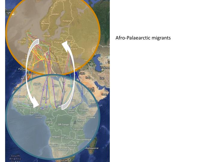 Afro-Palaearctic migrants