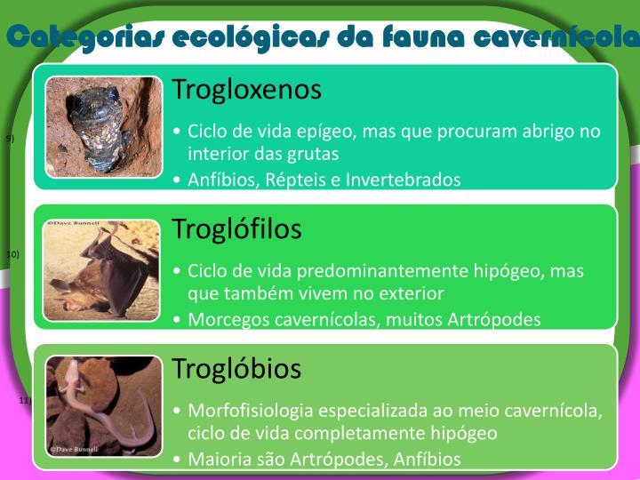 Categorias ecológicas da fauna cavernícola