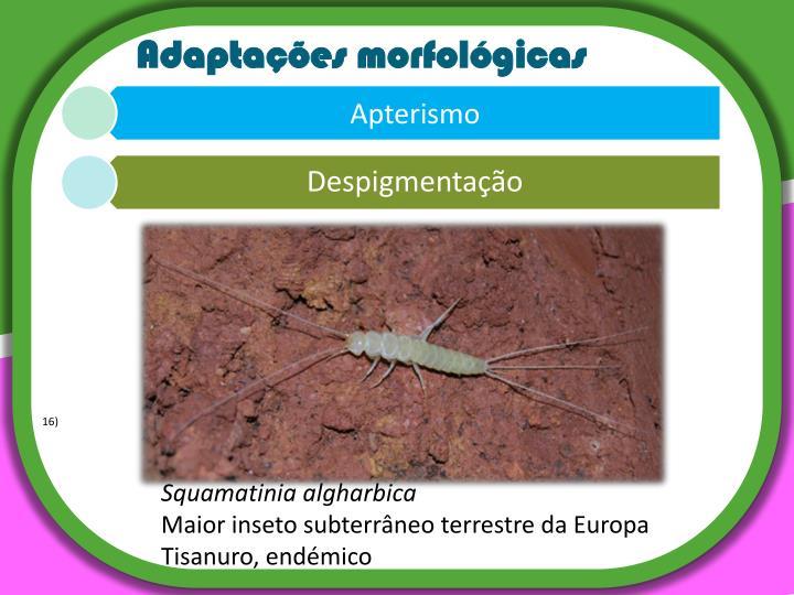 Adaptações morfológicas