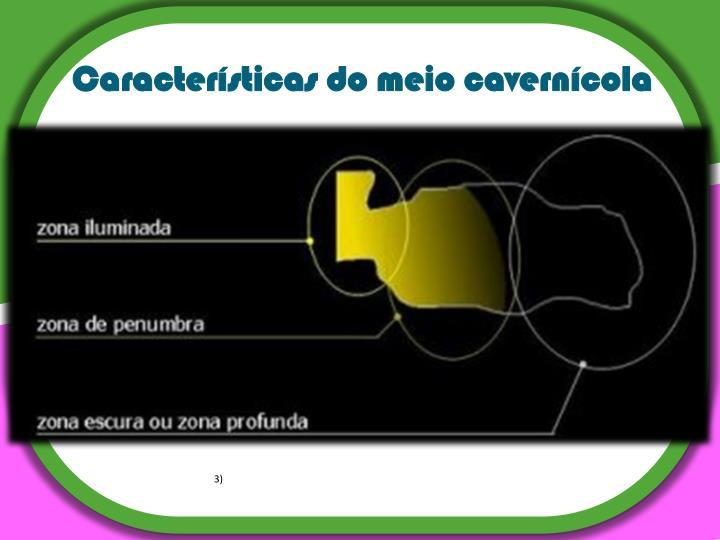 Características do meio cavernícola