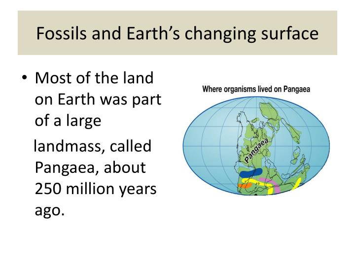 Fossils and Earth's changing surface
