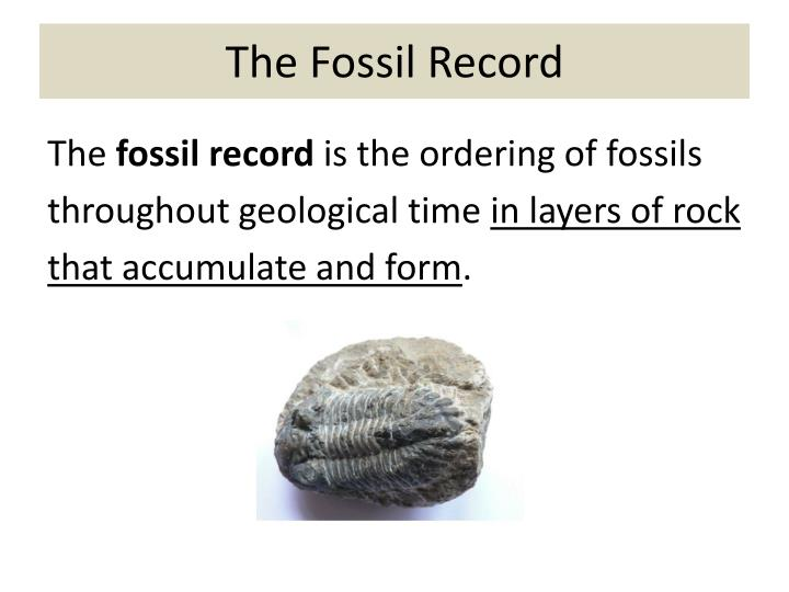 The Fossil Record