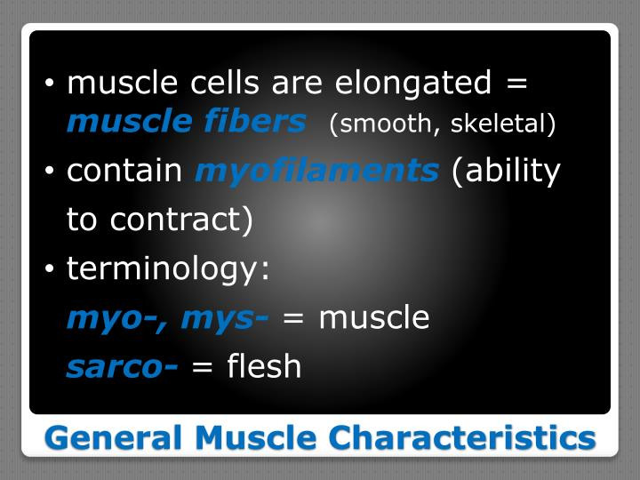 muscle cells are elongated =