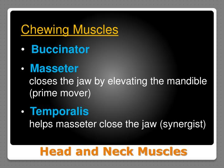 Chewing Muscles