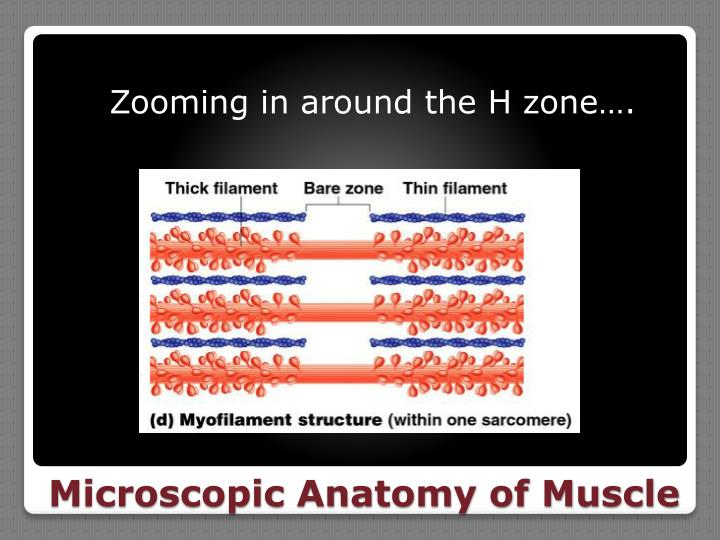 Zooming in around the H zone….