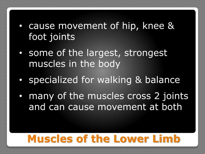 cause movement of hip, knee &