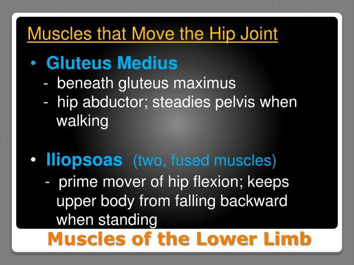 Muscles that Move the Hip Joint